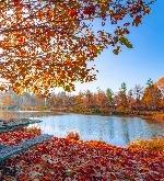 Осень из Мидтауна