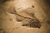 Ископаемая_рыба